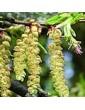 Netýkavka žláznatá / Impatients (18), 10 ml - Bachovy květové bio esence
