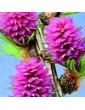 Modřín opadavý / Larch (19), 10 ml - Bachovy květové bio esence