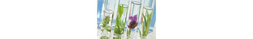Aromaterapie ALTHO